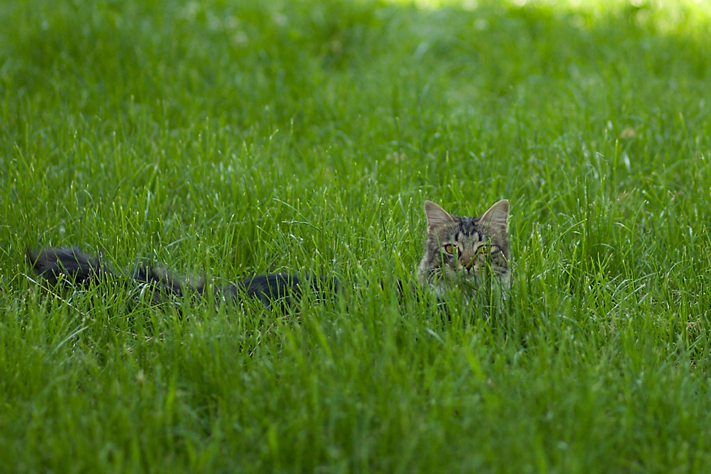 Новороссийск. Кот во дворе. Фото Андрей Бондаренко