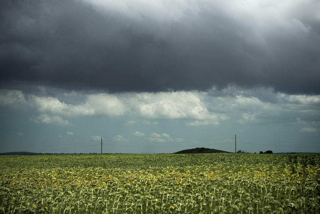 Тамань. Поля подсолнухов. Фото Андрей Бондаренко