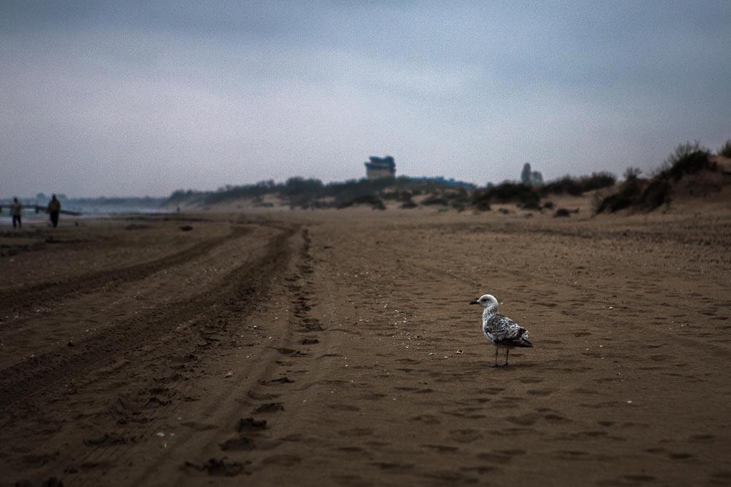 Анапа. Пляж. Апрель. Чайка. фото Андрей Бондадренко