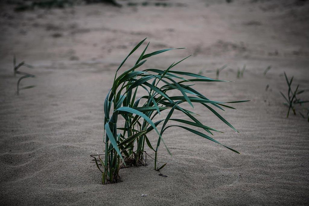 Анапа. Пляж Апрель. Кустик. Фото Андрей Бондаренко